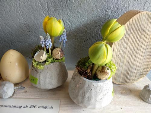 Tulpen in Beton